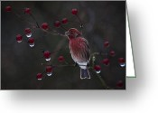 House Finch Greeting Cards - House Finch Greeting Card by Ron Jones