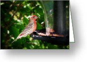 House Finch Greeting Cards - House Finch Greeting Card by Scott Hovind