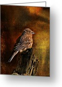 House Finch Greeting Cards - House Finch With Sunflower Seed Greeting Card by J Larry Walker