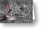Hare Greeting Cards - How About Two Out of Three . Desaturated Greeting Card by Wingsdomain Art and Photography