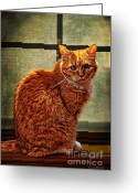 "\\\""photo Manipulation\\\\\\\"" Greeting Cards - How Much is That Kitty in the Window Greeting Card by Karen Slagle"