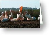 Terry Digital Art Greeting Cards - Howling Pelicans Greeting Card by Terry Bottom