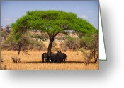 Maasai Mara Greeting Cards - Huddled in Shade Greeting Card by Adam Romanowicz