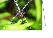 Spreads Greeting Cards - Huge Orb Weaver Greeting Card by Michele Penner
