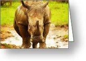 Game Animals Photo Greeting Cards - Huge South African rhino Greeting Card by Anna Omelchenko