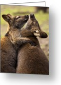 Embrace Greeting Cards - Hugs Greeting Card by Mike  Dawson