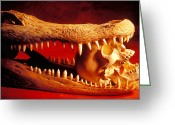 Sharp Teeth Greeting Cards - Human skull  alligator skull Greeting Card by Garry Gay