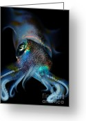 Squid Greeting Cards - Humboldt Squid Greeting Card by Pg Reproductions