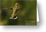 Arizona Greeting Cards Greeting Cards - Hummer Greeting Card by Robert Bales