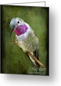 Pollinate Greeting Cards - Humminbird At Rest Greeting Card by Susan Candelario