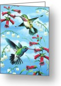 Women Greeting Cards - Humming Birds Greeting Card by JQ Licensing