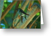 S. California Greeting Cards - Hummingbird 2 Greeting Card by Helen Carson