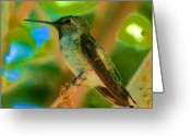 S. California Greeting Cards - Hummingbird 5 Greeting Card by Helen Carson