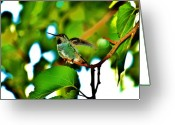 S. California Greeting Cards - Hummingbird 9 Greeting Card by Helen Carson