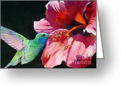 Birds Greeting Cards - Hummingbird And Hibiscus Greeting Card by Robert Hooper