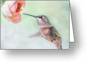 Ranunculus Greeting Cards - Hummingbird And Ranunculus Greeting Card by Susan Gary