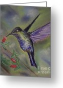 Feeding Pastels Greeting Cards - Hummingbird at Work Greeting Card by Julie Brugh Riffey