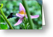 St. Lucia Photographs Greeting Cards - Hummingbird Greeting Card by Bill Mortley