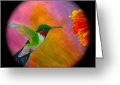 Shaman Drum Greeting Cards - Hummingbird  Greeting Card by Ethan  Foxx