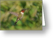 Indiana Photography Photo Greeting Cards - Hummingbird in Flight Greeting Card by Sandy Keeton