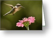 Grace Greeting Cards - Hummingbird Greeting Card by Jody Trappe Photography