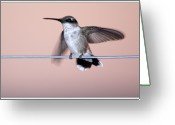 Oklahoma Greeting Cards - Hummingbird On A Wire Greeting Card by Wind Home Photography
