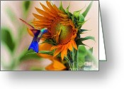 John Kolenberg Greeting Cards - Hummingbird On Sunflower Greeting Card by John  Kolenberg