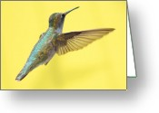 Flight Greeting Cards - Hummingbird on Yellow 3 Greeting Card by Robert  Suits Jr