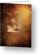 Feeding Greeting Cards - Hummingbird Resting in Golden Light Greeting Card by Cindy Singleton