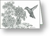 Feeding Drawings Greeting Cards - Hummingbird  Greeting Card by Sharon Blanchard