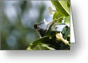 Little Bird Greeting Cards - Hummingbird Snack Greeting Card by Christi Kraft