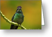 Colorful Birds Photo Greeting Cards - Hummingbird with a lilac Crown Greeting Card by Heiko Koehrer-Wagner