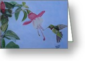 Fushia Pastels Greeting Cards - Hummingbird with Fushias Greeting Card by Brenda Maas