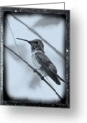 Old-fashion Digital Art Greeting Cards - Hummingbird with Old-Fashioned Frame 1 Greeting Card by Carol Groenen