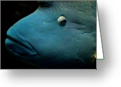 Natural Pattern Greeting Cards - Humphead Wrasse (cheilinus Undulatus) Greeting Card by Tobias Titz