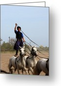 Driving Team Greeting Cards - Hungarian CowboyRiding 2 Horses Greeting Card by Sally Weigand