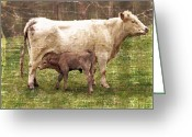 Green Pasture Greeting Cards - Hungry Baby Greeting Card by Kathy Jennings
