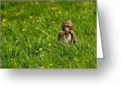 Feed Greeting Cards - Hungry Monkey Greeting Card by Justin Albrecht