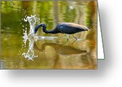 Herons Greeting Cards - Hungry Splash Greeting Card by Emily Stauring