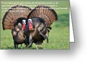 Eastern Turkey Greeting Cards - Hunters Prayer Greeting Card by Todd Hostetter