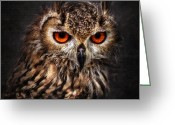 Birds Pyrography Greeting Cards - Hunting Eyes Greeting Card by Ian David Soar