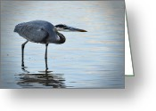 Heron.birds Greeting Cards - Hunting High and Low  Greeting Card by Saija  Lehtonen