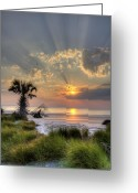 Carolina Greeting Cards - Hunting Island SC Sunrise Palm Greeting Card by Dustin K Ryan