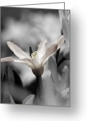 Colorado Photographers Greeting Cards - Hush Greeting Card by Catherine Fenner