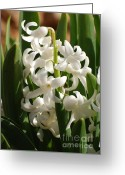 Elena Kotliarker Greeting Cards - Hyacinthus Greeting Card by Elena Kotliarker
