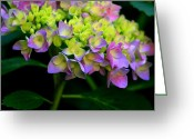 Garden Pyrography Greeting Cards - Hydrangea Beauty Greeting Card by Valia Bradshaw