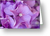 Color Purple Greeting Cards - Hydrangea Greeting Card by Frank Tschakert