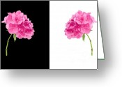 Head Greeting Cards - Hydrangeas On Black And White Greeting Card by Meirion Matthias