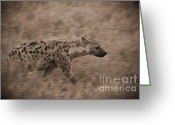 On-the-look-out Greeting Cards - Hyena on the Move Greeting Card by Darcy Michaelchuk