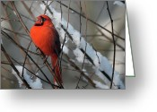 Cardinals In Snow Greeting Cards - I Am So Ready For Spring Greeting Card by Lois Bryan